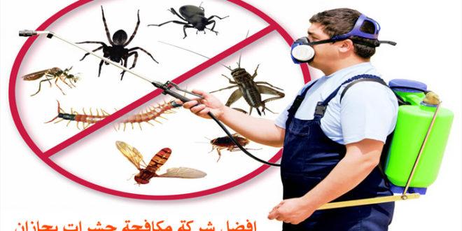 حشرات بجازان