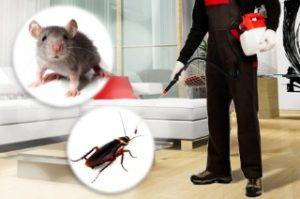 شركة مكافحة الأفات والحشرات بالرياض