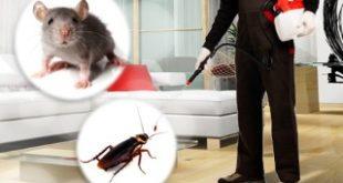 مكافحة حشرات بالقطيف