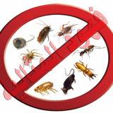 ماهي خدمات شركة مكافحة الحشرات