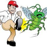 كيف تتخلص من الحشرات بطريقة صحيحة