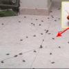 وسائل فعالة للتخلص من الحشرات