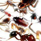 طرق طبيعية للتخلص من حشرات المنزل