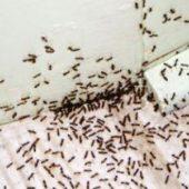 بدون كيماويات تخلصي من حشرات المطبخ