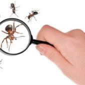 تخلصي من النمل في منزلك بهذه الطريقة