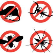 شركة مكافحة الحشرات بالمملكة العربية السعودية