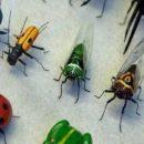 بحيل بسيطة امنعي الحشرات من دخول منزلك