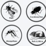 شركة مكافحة حشرات فى الدمام