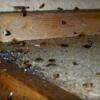 طرق بسيطة تحمي عائلتك من لدغات الحشرات في الصيف